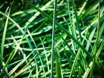 grön sommar Royaltyfria Bilder