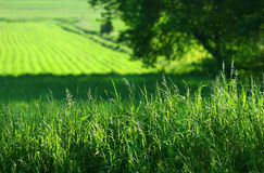 grön sommar för fält Arkivbild