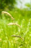 grön sommar för gräs arkivbild