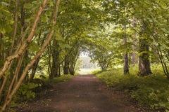 grön sommar för skog Arkivbilder