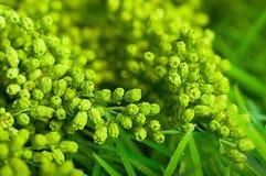 Grön sommarväxt royaltyfri foto