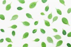 Grön spenatsidamodell på bästa sikt för vit bakgrund Lekmanna- lägenhet royaltyfria bilder