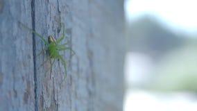 Grön spindel på träbräde