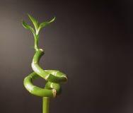 Grön spiral av liv Arkivfoton
