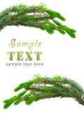grön spruce för filialer royaltyfri foto