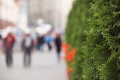 Grön stad på en solig dag Arkivbilder