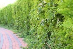 Grön staketcloseup Fotografering för Bildbyråer