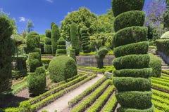 Grön staketkonst i botaniska trädgården, Funchal madeiraö Royaltyfria Bilder