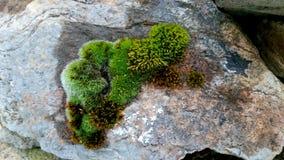 grön sten Arkivbild