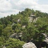 grön stenig trail Royaltyfria Bilder