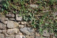 grön stenvägg Royaltyfri Bild