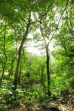 grön stråle för skog royaltyfri bild