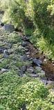 grön ström Royaltyfria Bilder