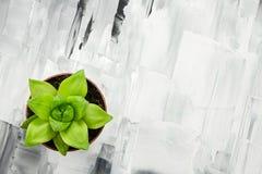 Grön suckulent växt på abstrakt begrepp målad bakgrund Royaltyfri Fotografi