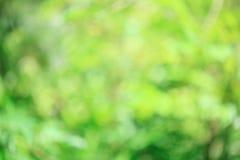 Grön suddig abstrakt bakgrund Royaltyfria Foton