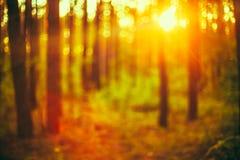 Grön suddig bakgrund för natur av ut ur fokusen Royaltyfri Bild