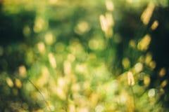 Grön suddig bakgrund för natur av ut ur fokusgräs eller Bokeh, Royaltyfri Foto
