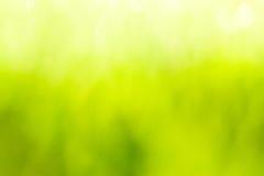 Grön suddig bakgrund och solljus Royaltyfria Foton