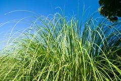 grön sun för gräs Arkivbild
