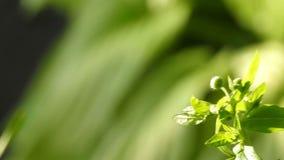 grön sund bakgrund för natur arkivfilmer