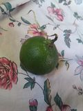 Grön sur frukt arkivfoton