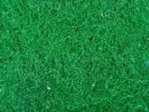 Grön svamptexturbakgrund arkivbild
