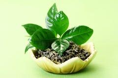 grön tea Fotografering för Bildbyråer