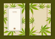 Grön tebladnaturbakgrund royaltyfria foton