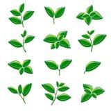 Grön tebladsamlingsuppsättning vektor stock illustrationer