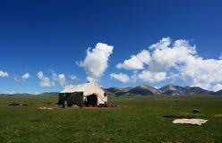 grön tent för fält Royaltyfria Foton
