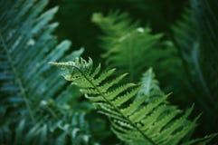 Grön terapi Arkivfoton