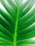 grön textur Arkivfoton