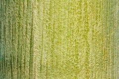 Grön textur för bakgrund för trädhudskrynkla Royaltyfria Foton