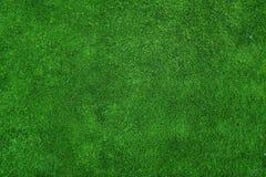 grön textur för gräs Arkivbilder