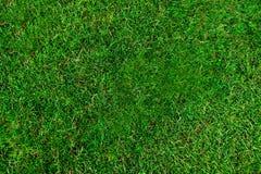 grön textur för gräs Fotografering för Bildbyråer