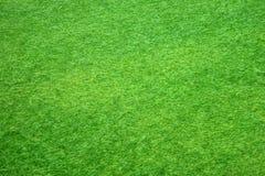 grön textur för gräs Royaltyfria Bilder