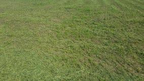 grön textur för gräs abstrakt textur Royaltyfria Bilder