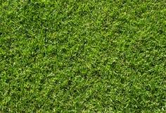 grön textur för gräs Grön bakgrund för gräsmattafotbollfält Royaltyfri Bild