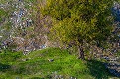 grön textur, solsken per Royaltyfria Foton