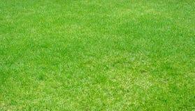 Grön texturerad bakgrund för gräsmatta modell, nytt grönt manicured gräsmattaslut upp royaltyfri foto