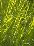 grön texturtråd för gräs Arkivbilder