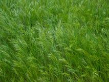grön texturtråd för gräs Royaltyfri Bild