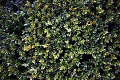 grön texturvägg Royaltyfria Bilder
