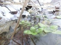 grön tillväxt Arkivfoto