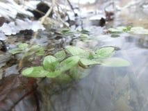 grön tillväxt Arkivfoton