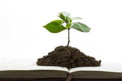 grön tillväxtväxt för bok Royaltyfria Bilder