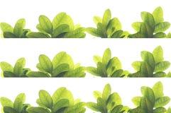 Grön tjänstledighetram Royaltyfri Foto