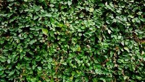 Grön tjänstledighetvägg Utomhus- husvägg Royaltyfri Fotografi