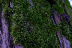 Grön tjock mossa på trädet arkivbilder