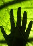 grön touch Royaltyfri Fotografi